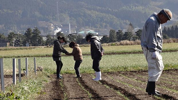 農場で麦踏みするメンバー