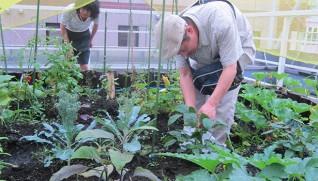 野菜を収穫する若者