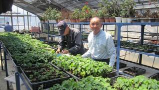 ビニールハウスで利用者と花づくりをする本田秀雄さん(右)=八尾園